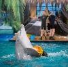 Дельфинарии, океанариумы в Новоподрезково